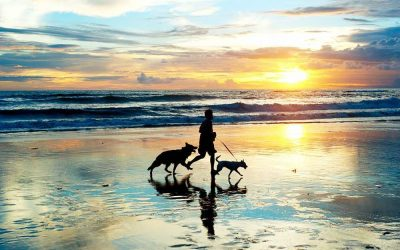 6 Benefits Of Going For A Run With My Dog