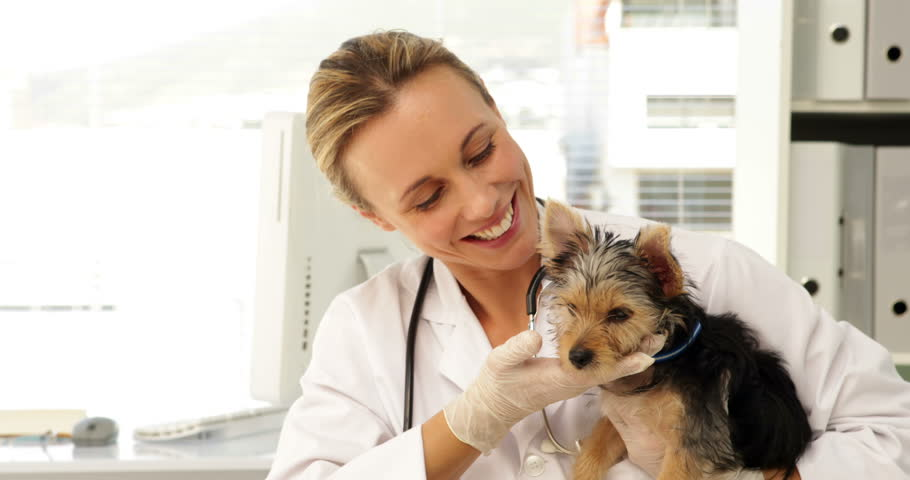 Six Common Yorkie Health Problems to Watch For