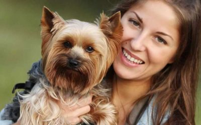 BARF Diet for Yorkshire Terrier